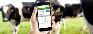 CattleSoft Banner | CattleTags | Tracking Cattle Using RFID Readers Mobile App