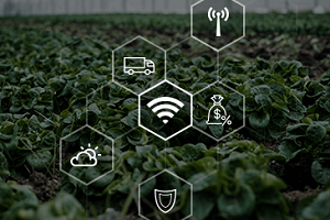 Custom Software Development In Agriculture