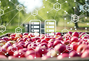 How we solved Agriculture Supply chain problem using Blockchain?